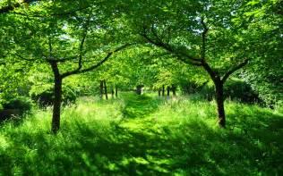 Garden Of Greens Green Summer Garden Wallpaper 2880x1800 30537