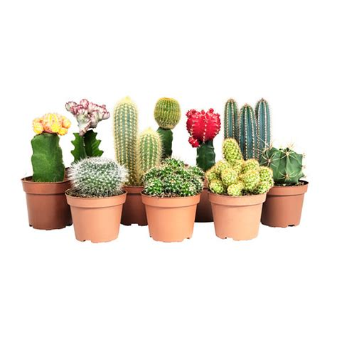 ikea outdoor plants cactaceae potted plant ikea