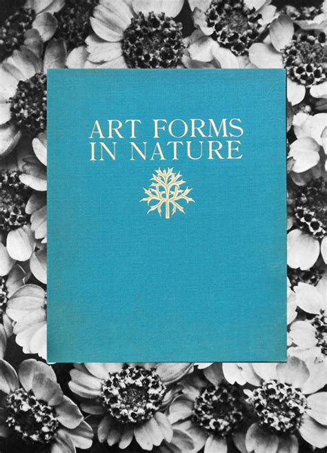 art forms in nature 3791319906 karl blossfeldt art forms in nature