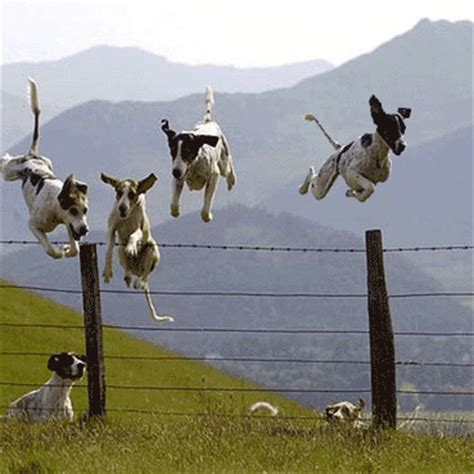 how to keep dog from jumping fence dog jumping fence dog breeds picture