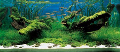grand prize works  international aquatic plants layout contest iaplc