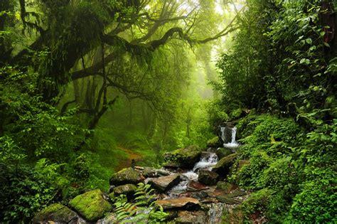 la selva de sara fue abandonada en la selva a los 5 a 241 os y criada por monos hoy nos cuenta su historia