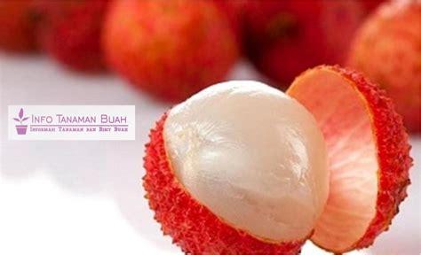 Bibit Pohon Buah Leci bibit buah leci si manis dan segar info tanaman buah