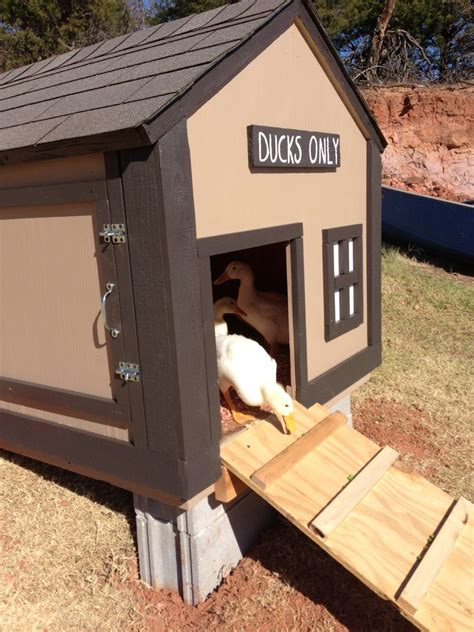 diy duck house coop plans ideas