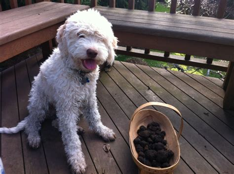 can dogs smell edibles working dogs it s a s dogbuddy