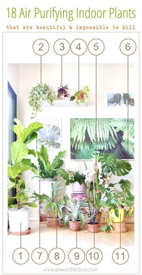 low light indoor plants house plants that thrive in lower light as 25 melhores ideias de best indoor plants no pinterest
