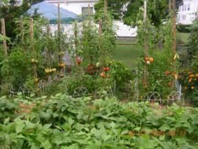 the italian tomato garden palmabella s passions