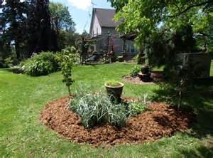 using cedar mulch in vegetable garden the most of your mulch gardening