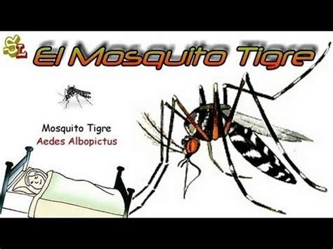 imagenes chistosas del zika virus zika mosquitos tigre tras para mosquitos