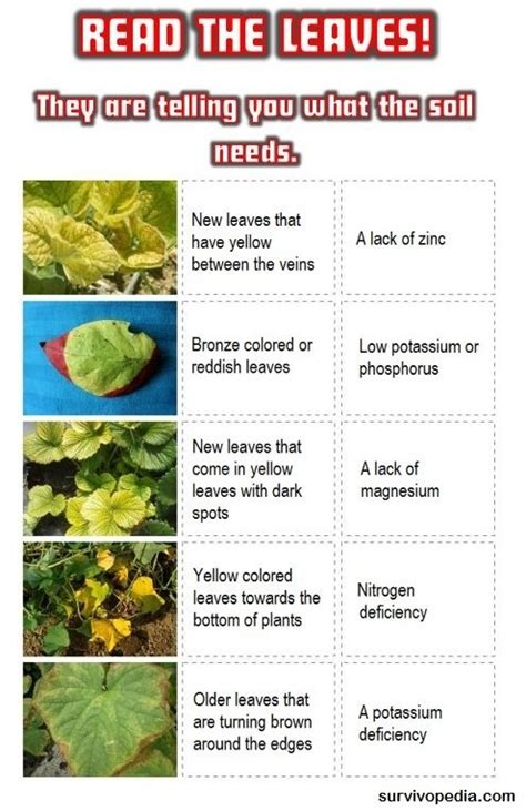 what causes leaves to change color 28 images why do