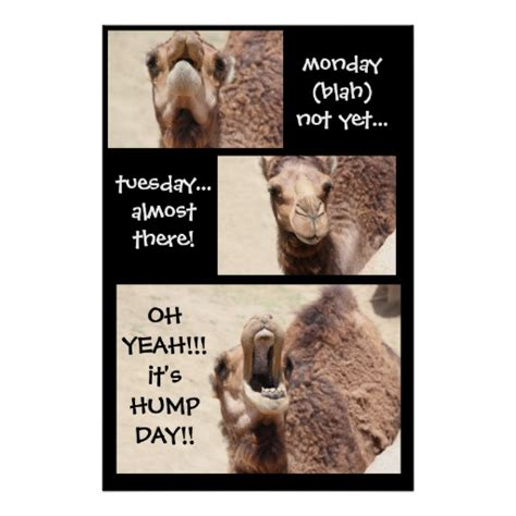 Camel Hump Day Meme - funny happy hump day camel