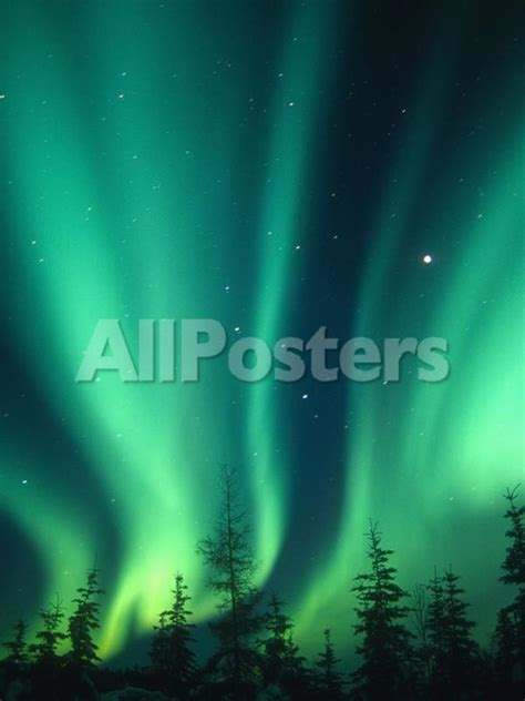 Walker Northern Lights borealis or northern lights alaska usa
