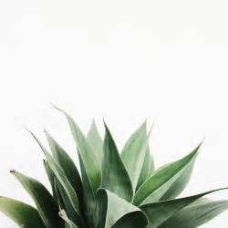 green plants 25 best ideas about green plants on plants plant and succulents