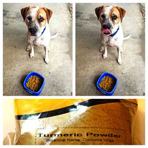 turmeric paste for dogs turmeric for dogs