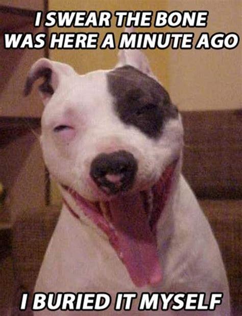 Stoned Dog Meme - stoner dog meme 20 pix of the funny meme based off 10 guy heavy com page 5