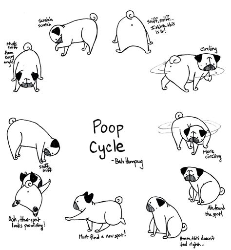 coloring pages of pug puppies baby pug coloring pages to print for kids and adults