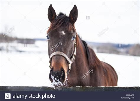 when horses are away celebs come out to play photos sowetan live pferd stock photos pferd stock images alamy