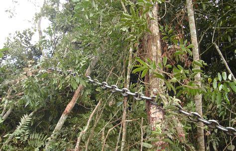 amazonia si鑒e social s 227 o paulo foi primeira cidade a exigir madeira certificada