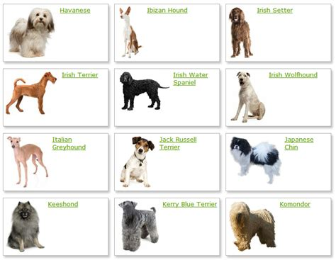 different dogs all list of different dogs breeds breeds list with picture