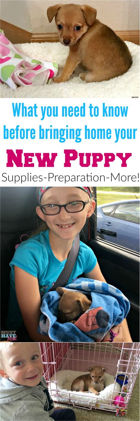your new puppy ultimate guide to bringing home your new puppy must