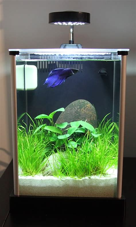 fluval spec aquascape narhay s office 2 gallon fluval spec planted tank
