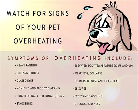 signs your is in heat fido s stay cation your s answer to heat stroke prevention edu