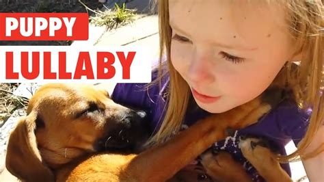 puppy lullaby sings rescue lullaby puppy 1funny