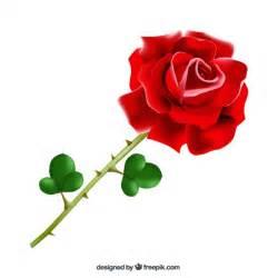 imagenes de rosas sangrientas rosa spina foto e vettori gratis