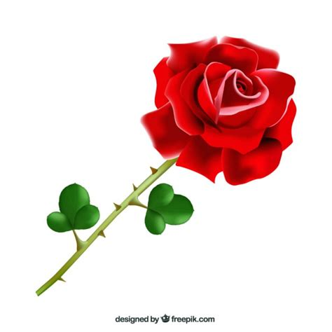 imagenes de rosas sombreadas rosa spina foto e vettori gratis