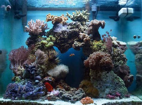 Aquascaping Live Rock Ideas by Reef Aquascaping On Reef Aquarium Saltwater