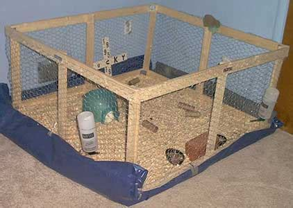 Cheap Indoor Rabbit Hutch Make Your Own Guinea Pig Cage Abyssinian Guinea Pig Tips