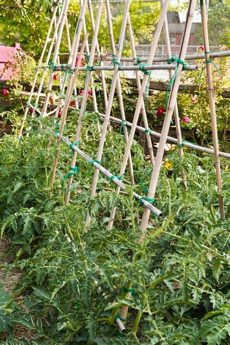 Bamboo Trellis Bamboo Trellis Garden
