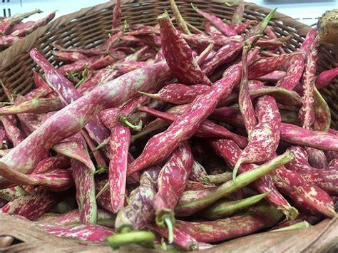 come cucinare fagioli freschi come cucinare i fagioli freschi specialit 224 per contorni