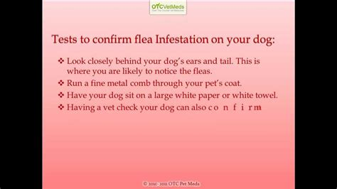 signs of fleas on dogs symptoms of fleas on dogs