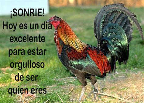 imagenes gratis de gallos con frases imagenes de gallos con frases bonitas imagenes de gallos
