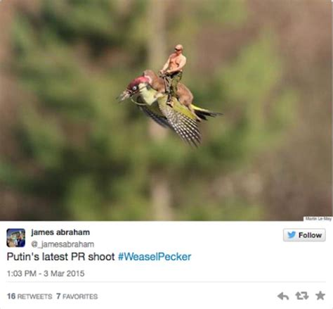 Weasel Meme - hilarious memes of the weasel riding the woodpecker 22