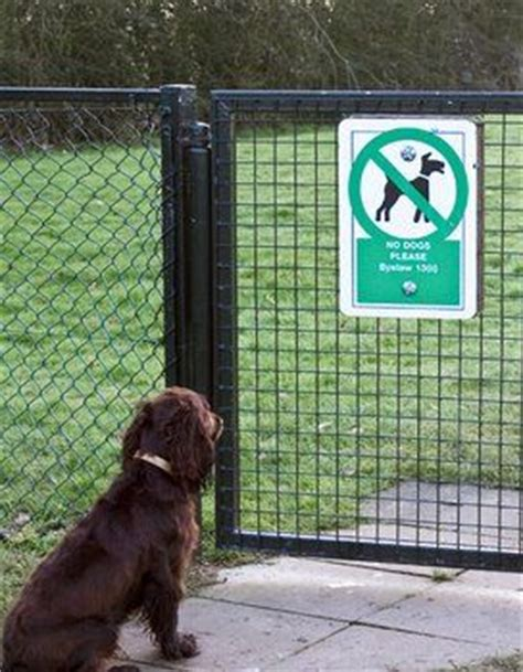 how to keep dog in yard without fence pinterest the world s catalog of ideas