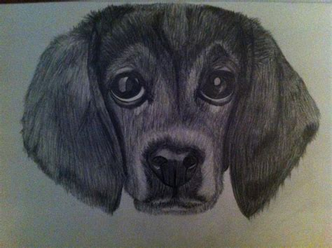 black and white beagle puppies beagle puppy black and white pencil by chaytheslender on deviantart