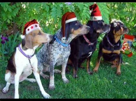 dogs barking jingle bells barking dogs jingle bells