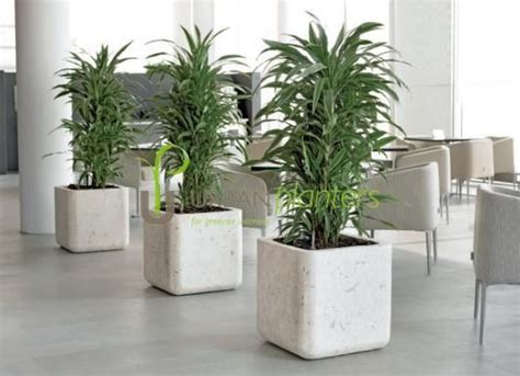 plant for office office plants interior landscaping tropical office