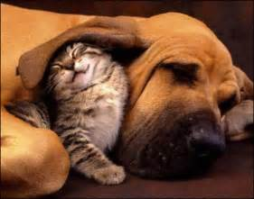 tattoo supplies near me cut kitten and hound dog funny pet picture check out