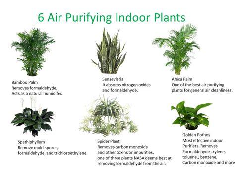 essential houseplants  clean indoor air kamal