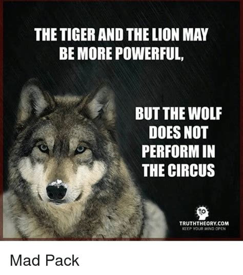 Mad Wolf Meme - the tiger and the lion may be more powerful but the wolf