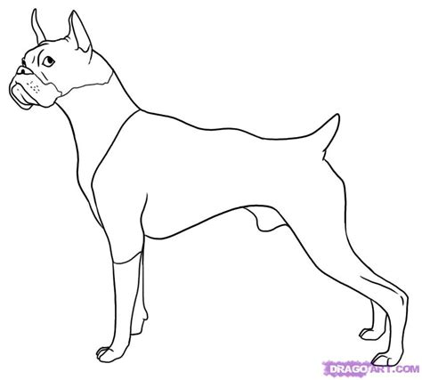 how to boxer dogs how to draw a boxer step by step pets animals free drawing tutorial added