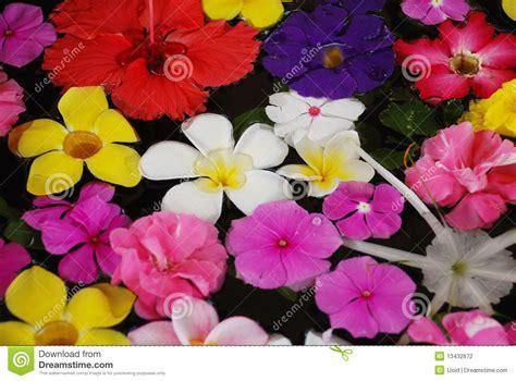 immagini di fiori esotici fiori esotici tropicali fotografia stock immagine 13432672