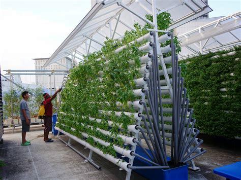 Roof Garden Accessories Effectiveness Of Rooftop Gardens Ecology Lsm4265