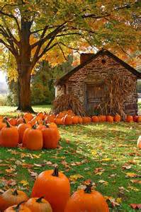 autumn fall leaves pumpkins image 3747720 by