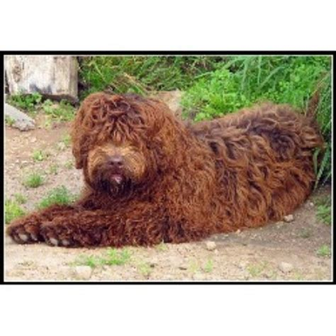 labradoodles puppies for sale scotland tora s australian labradoodles in argyll argyll and bute