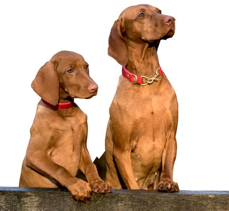 dogs two two dogs png image pngpix