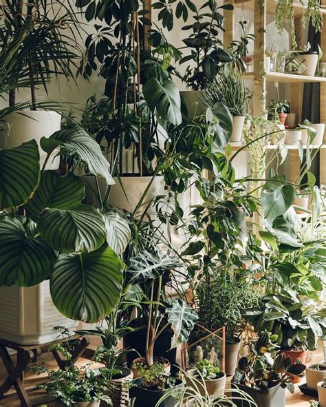 plants home decor 9 jpg it s good to be home all the plants seem to have survived